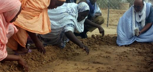 mauritaniariego